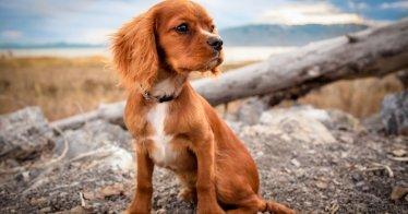 Der Glücksknochen - Kurzgeschichte über einen Hund