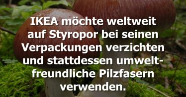 IKEA will kompostierbare Verpackungen aus Pilzfasern nutzen