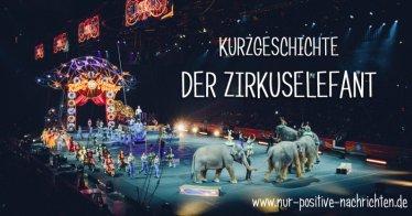 Inspirierende Geschichte: Der Zirkuselefant
