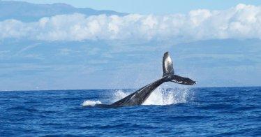 So reagieren Wale auf Flötenmusik - Foto: Abigail Lynn | Unsplash.com