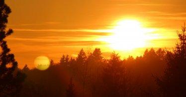 Rückkehr der Wälder und dessen Wildtiere in New England