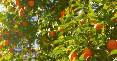 Mundraub: interaktive Karte zum freien Ernten von Obst (Video)