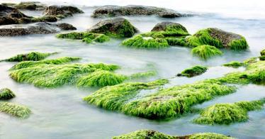 7 nachhaltige Nutzungsmöglichkeiten von Algen
