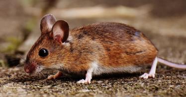 Australien verbietet Tierversuche für Kosmetika