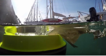 "Der ""Seabin"" sammelt Müll aus dem Meer (Video)"