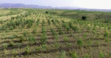 Billion Tree Tsunami: Pakistan pflanzte 1 Milliarde Bäume in zwei Jahren (Video)