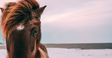 Der Verlust eines Pferdes - Bilderquelle: Benny Jackson | unsplash.com