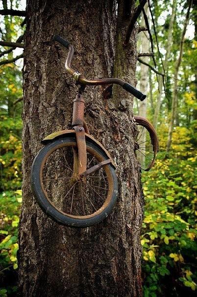Quelle: http://www.viralnova.com/tree-takeover-gallery/11/