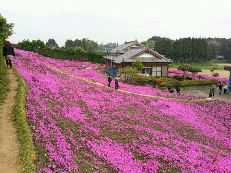 Mann pflanzt Blumen für blinde Frau | Quelle: https://www.youtube.com/watch?v=aVXpBqj67BY