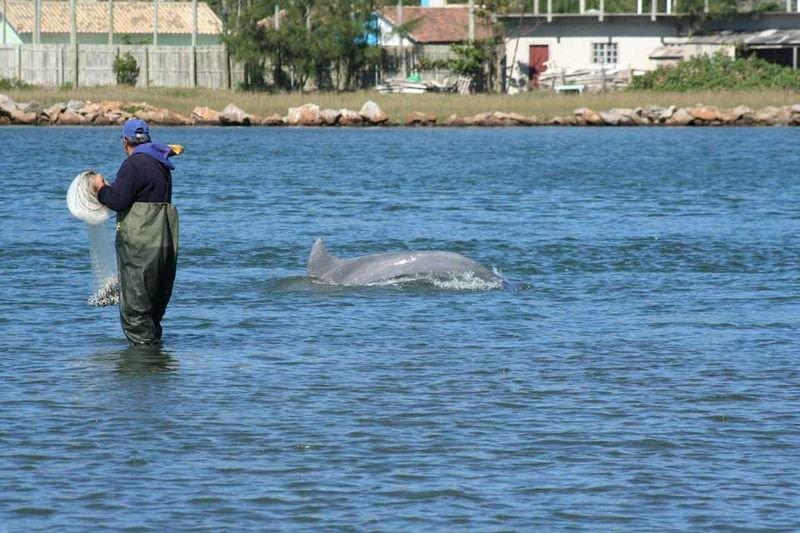 Quelle: http://www.delfine-und-wale-im-meer.de/fileadmin/redakteure/bilder/allgemein/delfines-ayudan-pescadores-brasil.jpg