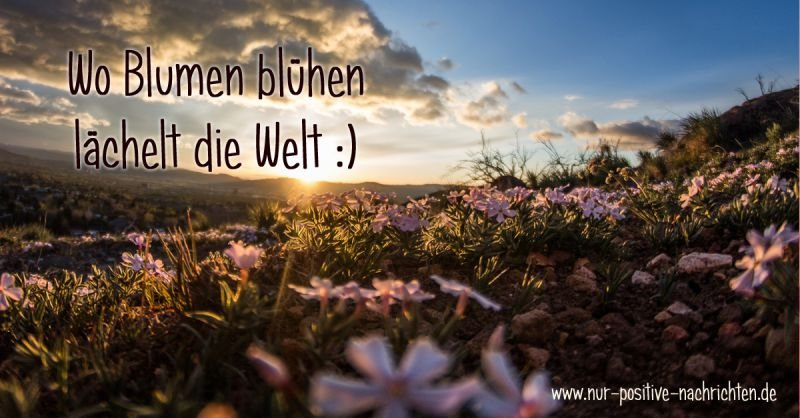 Inspirierende Sprüche Blumen