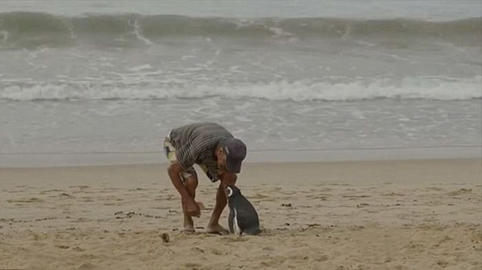 Gute Nachrichten | Quelle: http://www.boredpanda.com/man-saves-penguin-returns-swims-5000-miles/