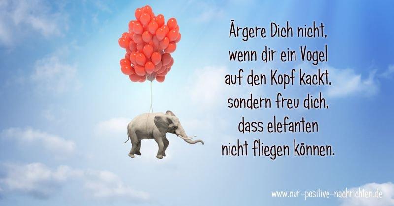 Lustige Sprüche - Ärgere Dich nicht, wenn dir ein Vogel auf den Kopf kackt, sondern freu dich, dass elefanten nicht fliegen können.