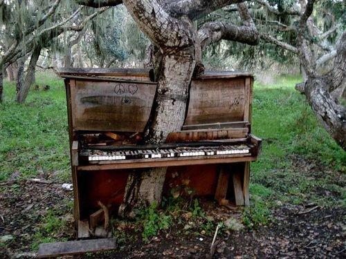 Quelle: http://www.viralnova.com/tree-takeover-gallery/
