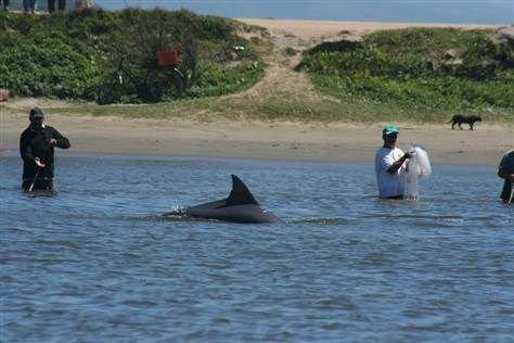 Quelle: http://www.delfine-und-wale-im-meer.de/fileadmin/redakteure/bilder/allgemein/delfines-ayudan-pescadores-brasil-2.jpg