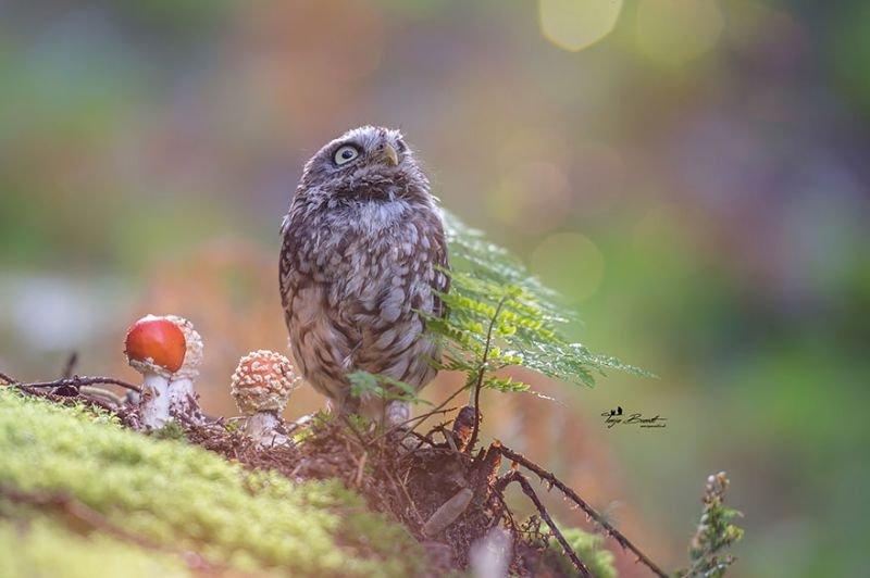 Copyright: Tanja Brand | http://www.boredpanda.com/owl-hiding-from-rain-mushroom-podli-tanja-brandt/