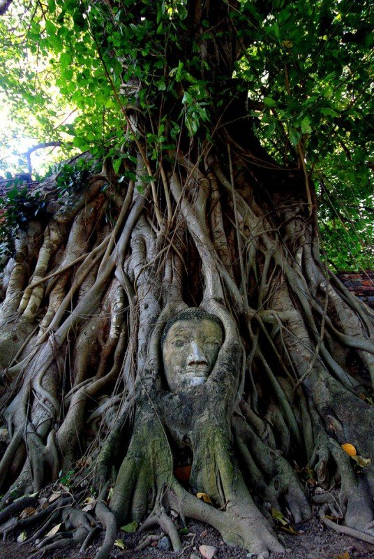 Quelle: http://www.viralnova.com/tree-takeover-gallery/8/