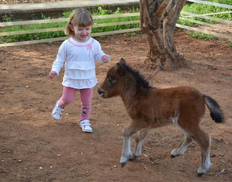 Eine Berufung bis hin zum kleinen Pferd oder warum Hannelore und Heino in Spanien wohnen. Der Verein Schattenkinder e.V. – Begeisterung schafft Räume