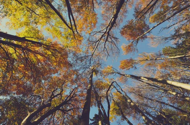 Positive Nachrichten Quelle: unplash.com