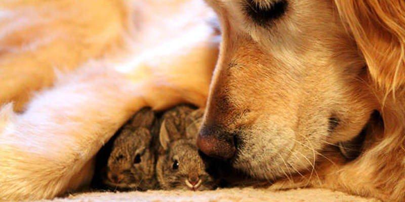 Helfende Tiere - Nächstenliebe unter Tiere