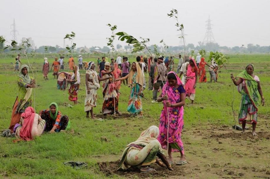 In Indien wurden 50 Millionen Bäume an einem Tag gepflanzt - Weltrekord | Quelle: https://www.instagram.com/p/BHx5HVVBcCb/