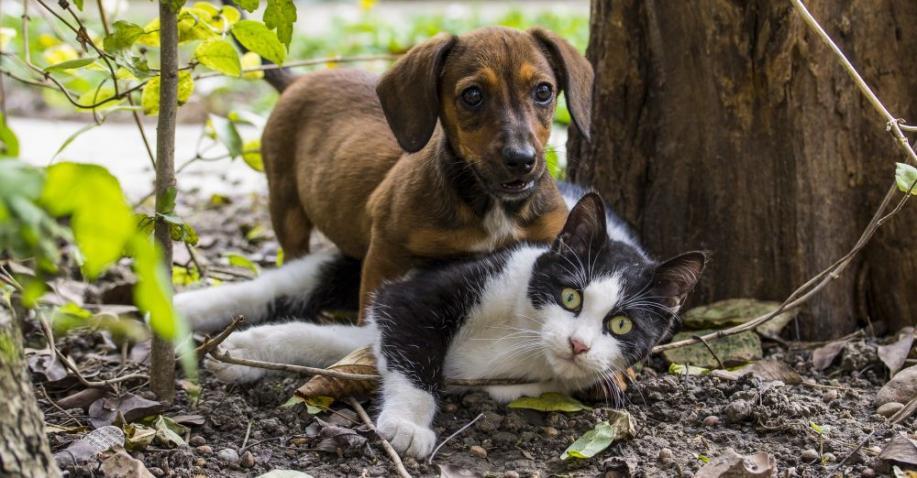 Taiwan hat den Verzehr von Hunde- und Katzenfleisch verboten (Video)