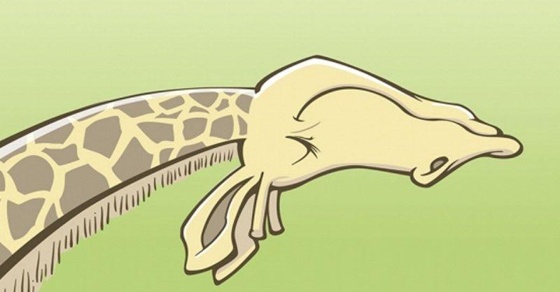 Giraffentango Selbstbewusste Kommunikation in der Partnerschaft - Buchrezension