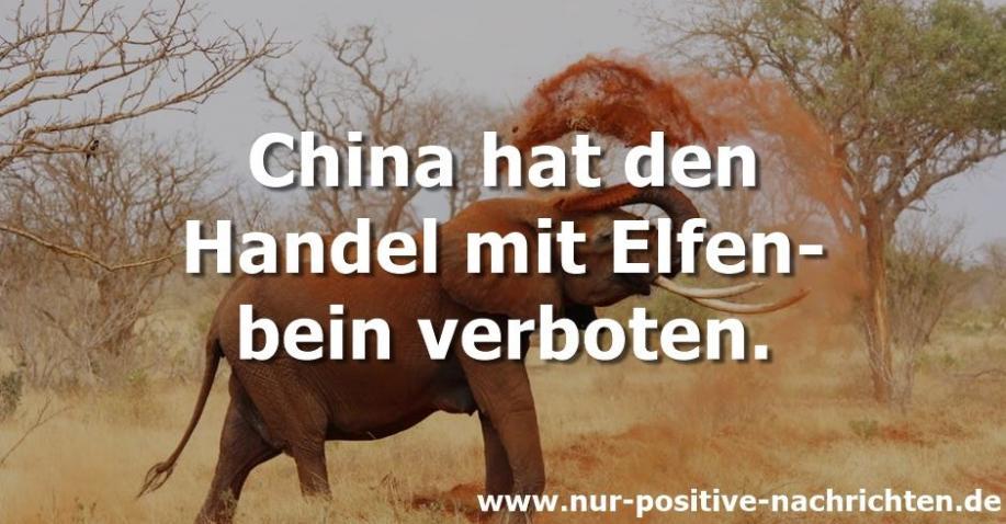 China: Handel mit Elfenbein wurde verboten