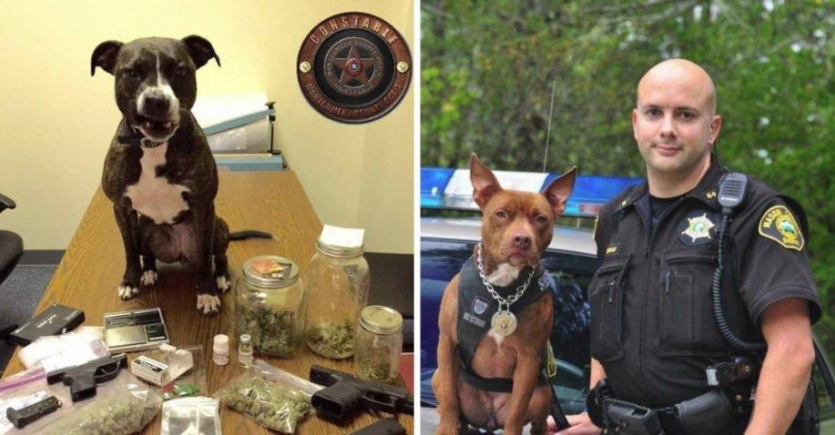 Polizei rettet Tierheimhunde und bildet sie zu Polzeihunden aus