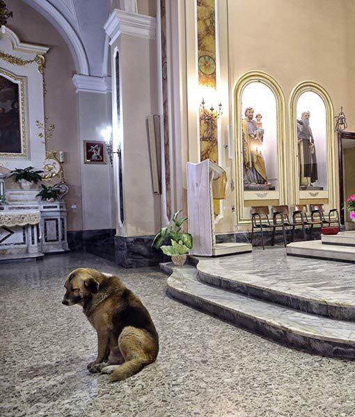 Warum dieser Hund jeden Tag in die Kirche geht bricht mir das Herz